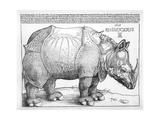 The Rhinoceros, 1515 Reproduction procédé giclée par Albrecht Dürer