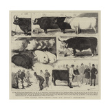 The Cattle Show, Leaves from Our Artist's Sketch-Book Impressão giclée por Alfred Chantrey Corbould