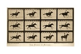 The Horse in Motion, 'Animal Locomotion' Series, C.1878 Stampa giclée di Muybridge, Eadweard