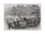The War in America, Quartermaster's Department, Killing Bullocks in the Federal Camp, Virginia Giclee Print by Frederick John Skill