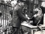 A Keeper and Sea Lion Shake Hands in 1931 Lámina fotográfica por Frederick William Bond