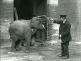 A Young Female Indian Elephant with Keeper H. Robertson, London Zoo, 22nd February 1922 Reproduction photographique par Frederick William Bond
