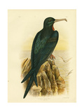 Frigate Bird, 1891 Reproduction procédé giclée par Gracius Broinowski