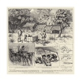 A Trout-Breeding Experiment in North-West India Giclée-Druck von Godefroy Durand