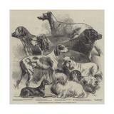 National Exhibition of Dogs at Birmingham Reproduction procédé giclée par Harrison William Weir