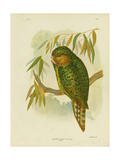Kakapo, 1891 Reproduction procédé giclée par Gracius Broinowski
