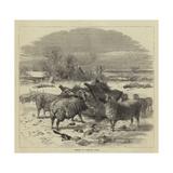 Sheep in Winter Time Reproduction procédé giclée par Harrison William Weir