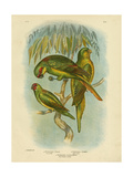 Scaly-Breasted Lorikeet, 1891 Reproduction procédé giclée par Gracius Broinowski