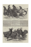 Exhibition of Poultry at Great Yarmouth Reproduction procédé giclée par Harrison William Weir