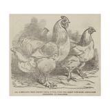 Mr Reynolds's Prize Cochin-China Fowls Reproduction procédé giclée par Harrison William Weir