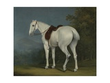 A Lady's Grey Hunter, C.1806 Giclee Print by Jacques-Laurent Agasse