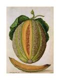 Melon, C.1568 Giclee Print by Jacques Le Moyne