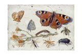 Three Butterflies, a Beetle and Other Insects, with a Cutting of Ragwort, Early 1650S Giclee Print by Jan van Kessel