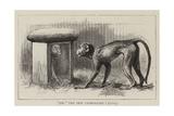 Wanderings in the Zoo Giclee-trykk av John Charles Dollman