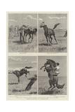 Horse Ranching in Queensland Giclee-trykk av John Charles Dollman