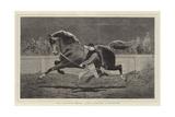 The Islington Horse Show, Trotting a Roadster Impressão giclée por John Charlton