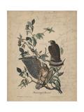 Broad-Winged Buzzard, 1840 Reproduction procédé giclée par John James Audubon