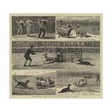 Sheep-Dog Trials at the Alexandra Palace Giclee-trykk av John Charles Dollman