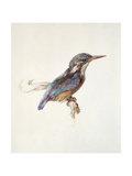 Study of a Kingfisher, with Dominant Reference to Colour, Probably October 1871 Giclee Print by John Ruskin