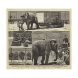 The Sale by Auction of Myers' Great American Circus and Hippodrome Giclee-trykk av John Charles Dollman