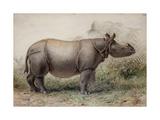 Javan Rhinoceros, 1874 Giclée-tryk af Joseph Wolf