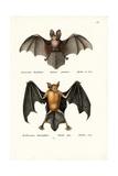 Hollow-Faced Bat, 1824 Reproduction procédé giclée par Karl Joseph Brodtmann