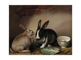Kaniner Giclée-tryk af Joseph Thomas Wilson