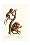 Red Howler Monkeys, 1824 Reproduction procédé giclée par Karl Joseph Brodtmann