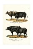 Gaur, 1824 Reproduction procédé giclée par Karl Joseph Brodtmann