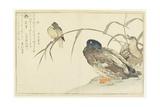 Mallards and a Kingfisher, 1790 Reproduction procédé giclée par Kitagawa Utamaro