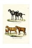 Goat, 1824 Reproduction procédé giclée par Karl Joseph Brodtmann
