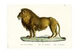 Barbary Lion, 1824 Reproduction procédé giclée par Karl Joseph Brodtmann
