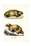 Walrus, 1824 Reproduction procédé giclée par Karl Joseph Brodtmann