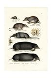 Shrews, 1824 Reproduction procédé giclée par Karl Joseph Brodtmann