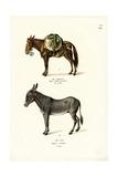 Donkey, 1824 Reproduction procédé giclée par Karl Joseph Brodtmann