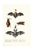 Common Pipistrelle, 1824 Reproduction procédé giclée par Karl Joseph Brodtmann