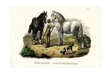 English Pit Horse, 1824 Reproduction procédé giclée par Karl Joseph Brodtmann
