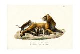 Lioness with Cubs, 1824 Reproduction procédé giclée par Karl Joseph Brodtmann