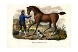 Mecklenburger Horse, 1824 Reproduction procédé giclée par Karl Joseph Brodtmann