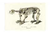 Giant Ground Sloth, 1824 Reproduction procédé giclée par Karl Joseph Brodtmann