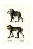 Drill, 1824 Reproduction procédé giclée par Karl Joseph Brodtmann