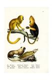 Golden Lion Tamarin, 1824 Reproduction procédé giclée par Karl Joseph Brodtmann