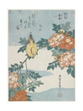 Black-Naped Oriole and China Rose, C. 1833 Reproduction procédé giclée par Katsushika Hokusai