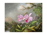 Study of an Orchid, 1872 Giclee Print by Martin Johnson Heade