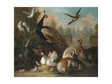 A Peacock and Other Birds in an Ornamental Landscape Lámina giclée por Marmaduke Cradock