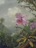 Hummingbird Perched on an Orchid Plant, 1901 Giclée-tryk af Martin Johnson Heade