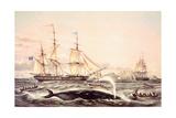 Whaling Off the Cape of Good Hope Giclée-Druck von Louis Lebreton