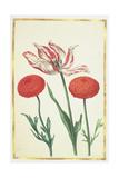 Tulip and Dahlias, C.1675 Giclee Print by Nicolas Robert