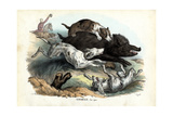 Wild Boar, 1863-79 Giclée-Druck von Raimundo Petraroja