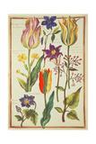 Flower Studies Giclee Print by Nicolas Robert